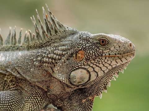 Benefits of Owning An Exotic Pet
