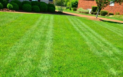 How to Mow a Lawn Like a Pro