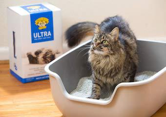 Best Cat Litters In 2021